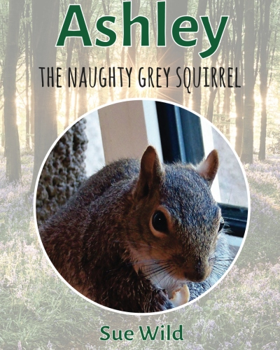 Click to buy Ashley the naughty grey squirrel