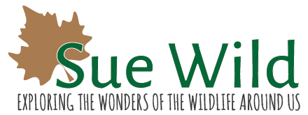 Sue Wild | Author of childrens books exploring the wonders of the wildlife around us.