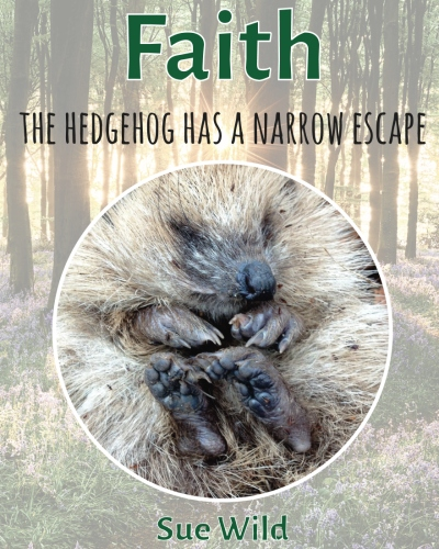 Click here to buy Faith the hedgehoghas a narrow escape