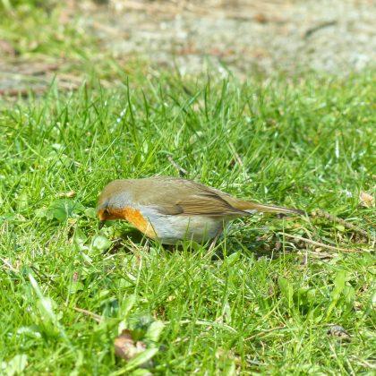bird-100069_1920