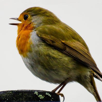 bird-1099640_1920