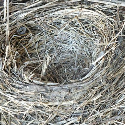 robins-nest-334124_1920