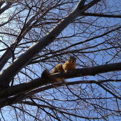 squirrel-288986_1280