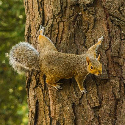 squirrel-845125_1920